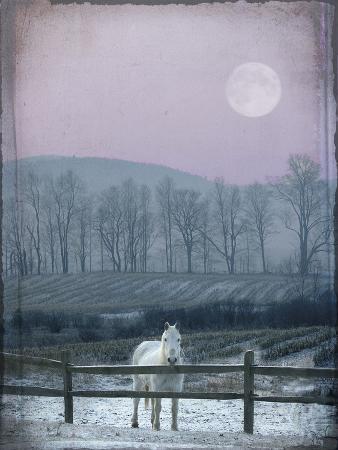 dawne-polis-prissy-on-snowy-night