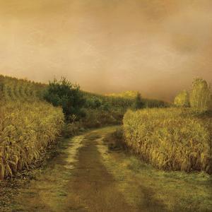 Sunset Cornfield by Dawne Polis