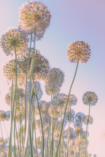 Daydreams-Nancy Crowell-Art Print
