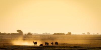 https://imgc.artprintimages.com/img/print/dazzle-of-zebras-chobe-national-park-botswana-africa_u-l-q1bokl90.jpg?p=0