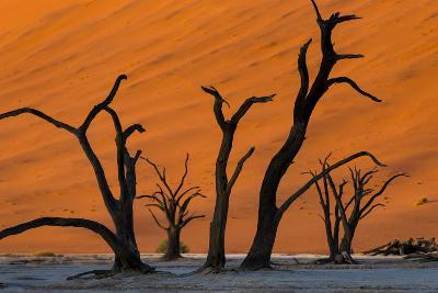 Dead Acacia Trees Silhouetted Against Sand Dunes at Deadvlei in Namibia-Alex Treadway-Photographic Print