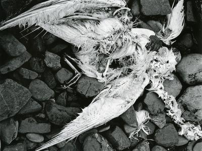https://imgc.artprintimages.com/img/print/dead-bird-bone-rock-c-1970_u-l-q1g6jsy0.jpg?p=0