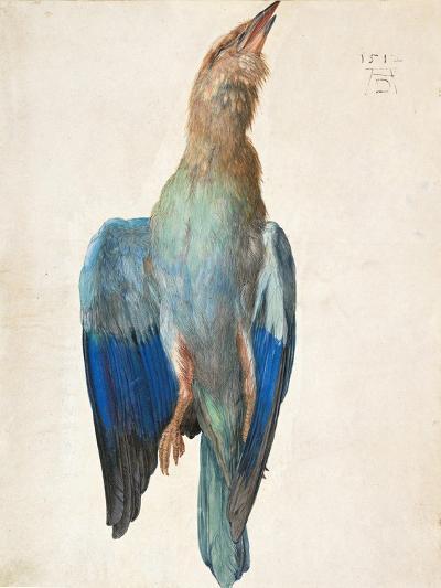 Dead Blue Roller, 1500 (Or 151)-Albrecht D?rer-Giclee Print