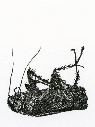 Dead Cockroach, 2014-Bella Larsson-Giclee Print