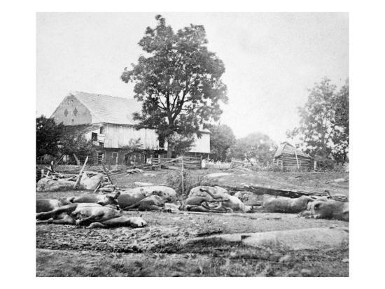 Dead Horses on the Battlefield, Civil War-Lantern Press-Art Print