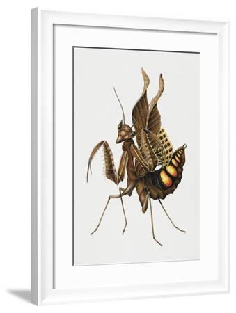 Dead-Leaf Mantis (Acanthops Falcata), Acanthopidae, Artwork by Brigette James--Framed Giclee Print