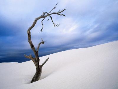 Dead Tree in Delisser Sandhills-Mitch Reardon-Photographic Print