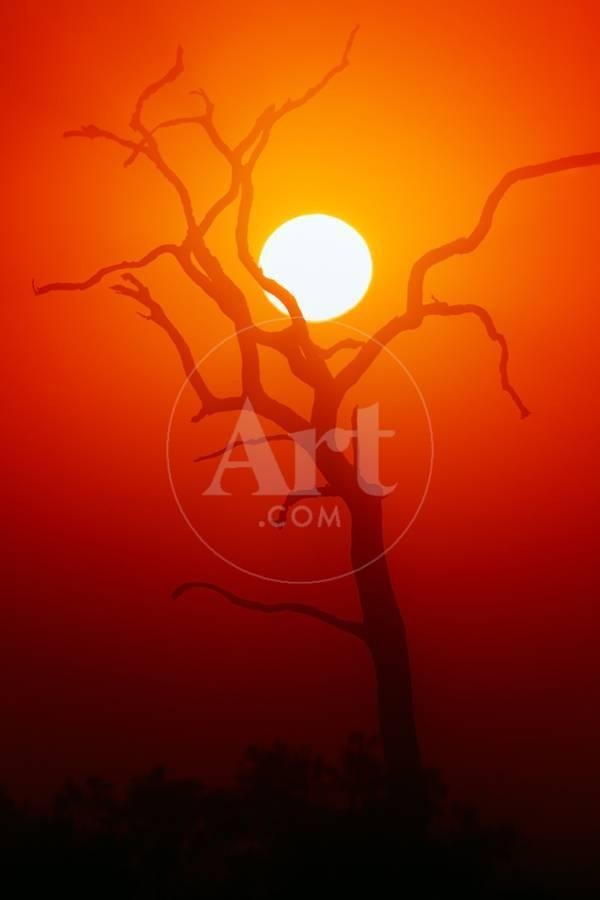 Dead Tree Silhouette with Dusty Sunset - Kruger National Park Photographic  Print by Johan Swanepoel | Art com