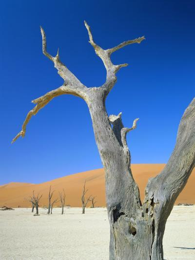 Dead Trees and Sun-Baked Pan, Dead Vlei, Namib Naukluft Park, Namibia-Lee Frost-Photographic Print
