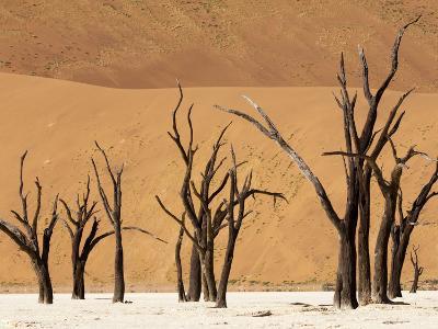 Dead Trees, Deadvlei, Sossusvlei, Namib Naukluft Park, Namib Desert, Namibia, Africa-Sergio Pitamitz-Photographic Print