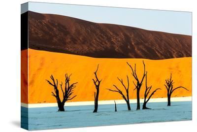 Dead trees in a desert, Dead Vlei, Sossusvlei, Namib Desert, Namib-Naukluft National Park, Namibia