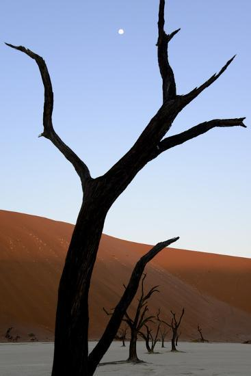 Dead Trees In Deadvlei Clay Pan, Sossusvlei. Namib-Naukluft National Park, Namibia, September 2013-Enrique Lopez-Tapia-Photographic Print