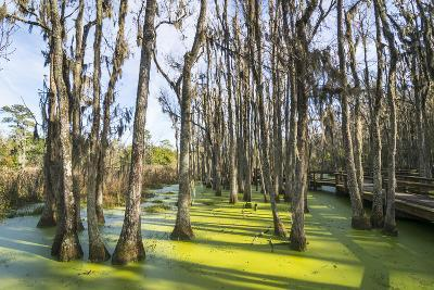 Dead Trees in the Swamps of the Magnolia Plantation Outside Charleston, South Carolina, U.S.A.-Michael Runkel-Photographic Print