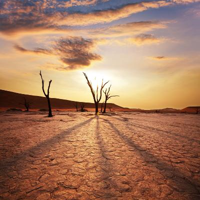 Dead Valley in Namibia-Andrushko Galyna-Photographic Print