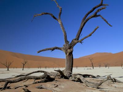 Dead Vlei, Sossusvlei Dune Field, Namib-Naukluft Park, Namib Desert, Namibia, Africa-Steve & Ann Toon-Photographic Print