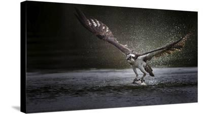 Deadly Catch-Phillip Chang-Stretched Canvas Print