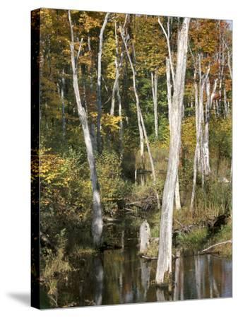 Deadwood Trees Along Scenic Lakeshore--Stretched Canvas Print