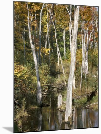 Deadwood Trees Along Scenic Lakeshore--Mounted Photographic Print