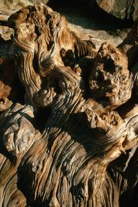 Gnarled Piece of Driftwood, California by Dean Conger