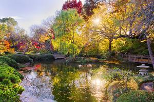 Fall Foliage in Texas by Dean Fikar