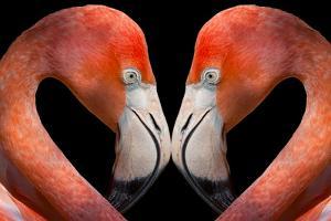 Kissing Flamingos by Dean Fikar