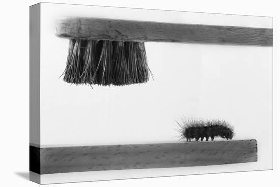 dear Friend-Stefano Mallus-Stretched Canvas Print