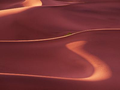 Death Valley Sand Dunes at Dawn, California, USA-Charles Sleicher-Photographic Print