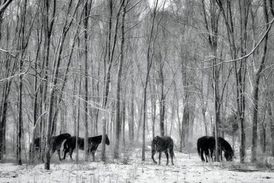Snow Dancers II