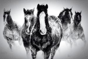 Winter Rumble by Deb Lee Carson