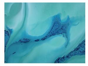 Blur of Blue by Deb McNaughton