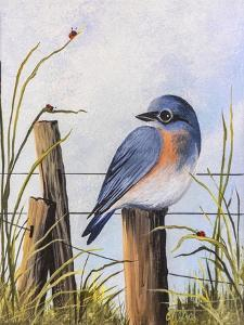 Bluebird by Debbi Wetzel