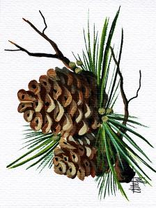 pine cone copy brochure by Debbi Wetzel