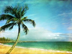 Palm in Paradise by Debbie Friley Photography