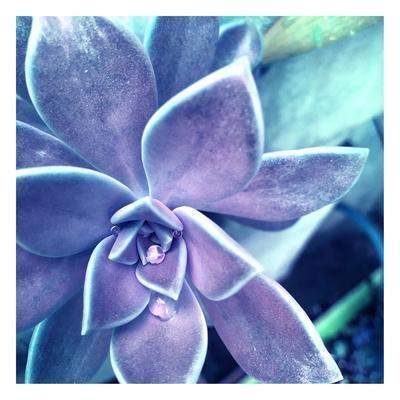 Succulent Dawn 2