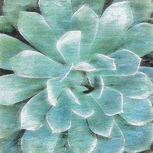 Succulent Memory 1 by Debbie Pearson