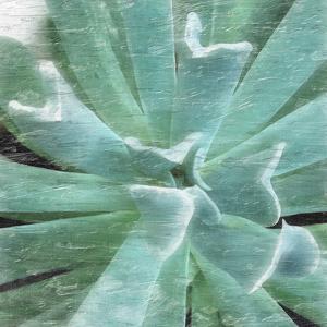 Succulent Memory 2 by Debbie Pearson