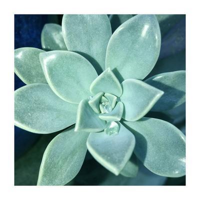 Succulent Splendor 5
