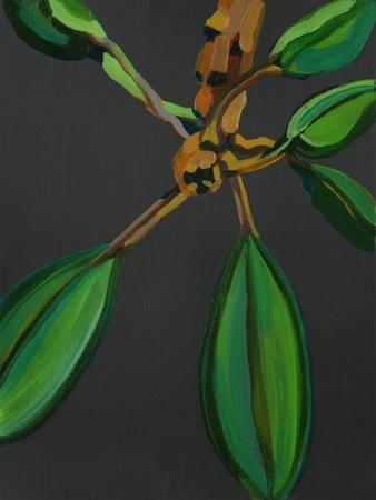 Frangipani Leaves, Bequia, 2008