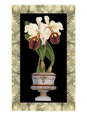 Orchid in Urn II