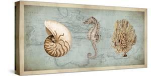 Sea Treasures I by Deborah Devellier