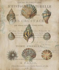Shell Collection I by Deborah Devellier