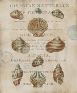 Shell Collection II by Deborah Devellier