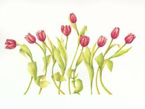 Nine Tulips Twirling by Deborah Kopka