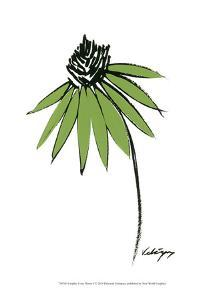 Graphic Cone Flower I by Deborah Velasquez