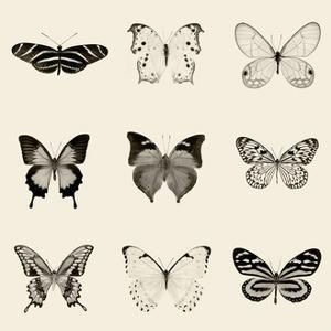 Butterfly BW 9 Patch by Debra Van Swearingen