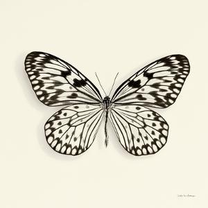 Butterfly V BW Crop by Debra Van Swearingen