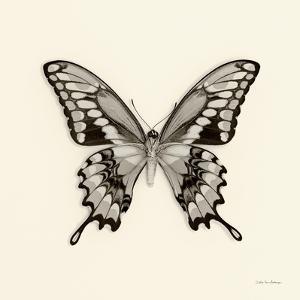 Butterfly VI BW Crop by Debra Van Swearingen