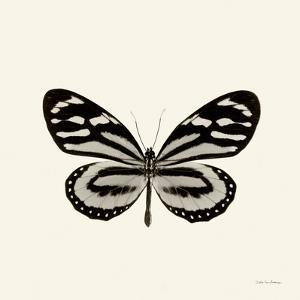 Butterfly VIII BW Crop by Debra Van Swearingen