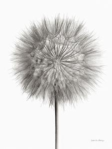 Dandelion Fluff on White by Debra Van Swearingen