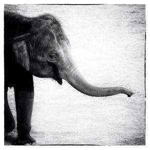 Elephant II by Debra Van Swearingen